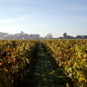 Château Smith Haut Lafitte – Vignes en Automne