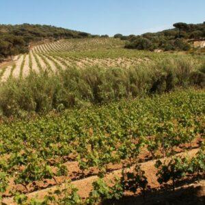 Domaine de la Croix - vignes